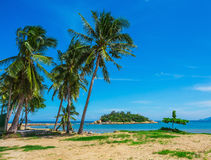 Palm trees on the shore of sea Royalty Free Stock Images