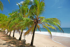 Palm trees on the shore Stock Photography