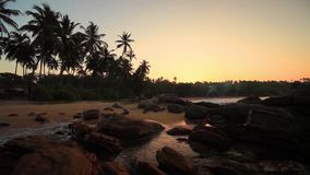 Palm trees on the shore of a tropical beach at sunset. Sri Lanka stock footage