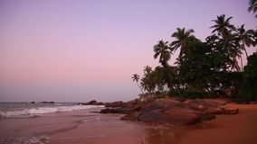 Palm trees on the shore of a tropical beach at sunset. Sri Lanka stock video