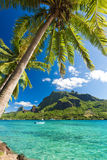 Palm Trees on Shoreline of Ocean at Moorea Stock Images