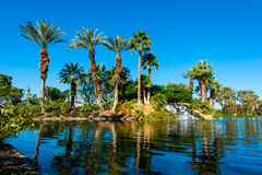 Palm trees on side of lake with reflection Stock Photography