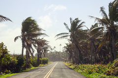 Palm Trees on the side of the road of San Andres Stock Photography