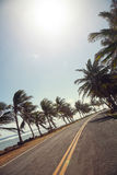 Palm Trees on the side of the road of San Andres Royalty Free Stock Photos