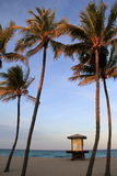 Palm trees and signs showing beach conditions,Miami,Florida,2914 Stock Photo
