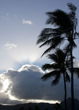 Palm Trees in Silhouette. With tropical storm clouds stock photography