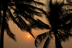 Palm trees silhouette. At sunset Bangsean beach Thailand Stock Photos