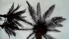 Palm Trees silhouette against cloudy Sky stock footage