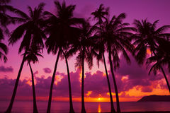 Free Palm Trees Silhouette At Sunset Royalty Free Stock Images - 86226189