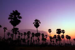 Palm trees silhouette on beautiful sunset Stock Images