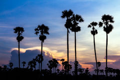 Palm trees silhouette on beautiful sunset Royalty Free Stock Images