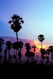 Palm trees silhouette on beautiful sunset Stock Photo