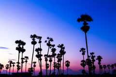 Palm trees silhouette on beautiful sunset Stock Image