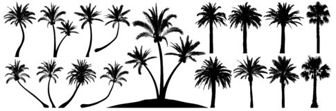 Free Palm Trees Silhouette. Coconut Tree Date Palm. Vector Set Tropical Trees Stock Photography - 160238122