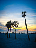 Palm Trees Silhouette Royalty Free Stock Photography