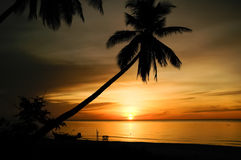 Palm trees silhouette at sunrise Royalty Free Stock Photography