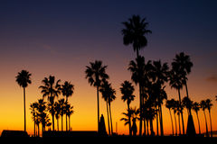 Palm Trees Silhouette with Sunset Royalty Free Stock Photography