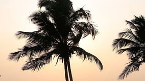 Palm Trees Silhouette. At Sunset stock footage