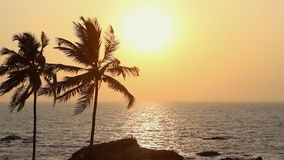 Palm Trees Silhouette. At Sunset stock video footage