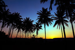 Palm trees silhouette with sunset Stock Photo