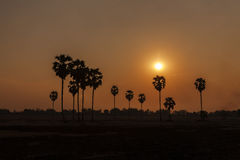 Palm trees silhouette at sunset Stock Photos
