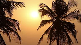 Palm Trees Silhouette At Sunset. Palm Trees Silhouette At beauty Sunset stock video