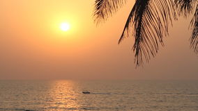 Palm Trees Silhouette At Sunset. Palm Trees Silhouette At beauty  Sunset stock video footage