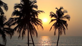 Palm trees silhouette at sunset. Palm trees silhouette at beauty sunset stock footage