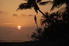 Palm trees silhouette at sunset with big sun behind clouds Royalty Free Stock Images