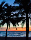 Palm trees silhouette. Sunset colorful sky backlight in Asia Stock Image
