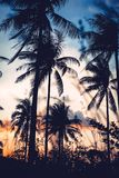 Palm trees silhouette at sunset Royalty Free Stock Photography