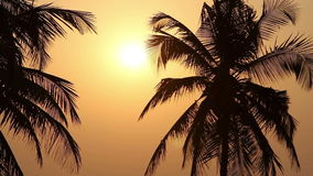 Palm Trees Silhouette At Sunset. A few Palm Trees Silhouette At Sunset stock footage