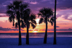 Palm Trees Silhouette. With Sunset, Horizontal Royalty Free Stock Photography
