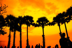 Palm trees silhouette at sunset Stock Images