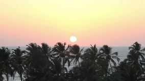 Palm Trees Silhouette At Sunset. A lot of Palm Trees Silhouette At Sunset stock footage