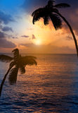 Palm trees silhouette and a sunset over the sea Stock Photos