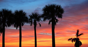 Palm trees silhouette on sunset sky Stock Photography