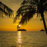 Palm trees silhouette at sunset Thailand Stock Image