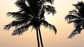 Palm Trees Silhouette At Sunset. Time stock video footage