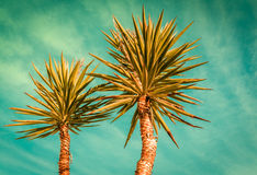 Palm trees silhouette on sunset tropical beach Royalty Free Stock Image