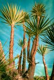 Palm trees silhouette on sunset tropical beach. Royalty Free Stock Images