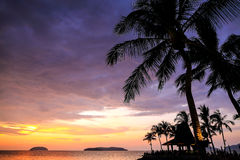 Palm trees silhouette with sunset Royalty Free Stock Images
