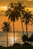Palm trees silhouette on sunset tropical beach Stock Photos