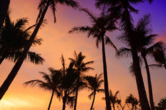 Palm trees silhouette on sunset tropical beach on Hawaii Stock Photos