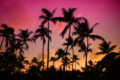 Palm trees silhouette on sunset tropical beach on Hawaii Royalty Free Stock Images