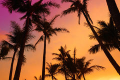 Palm trees silhouette on sunset tropical beach on Hawaii Royalty Free Stock Image