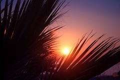 Palm trees silhouette on sunset tropical beach Royalty Free Stock Images