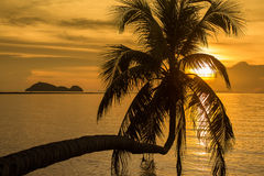 Palm trees silhouette on sunset tropical beach. Palm tree silhouette at sunset, Koh Phangan island, Thailand Stock Photo