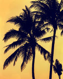 Palm trees silhouette at sunset in tropical Hainan Island - China. Palm trees silhouette at sunset in Hainan Island - China Stock Image