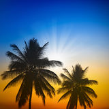 Palm trees silhouette on sunset Royalty Free Stock Images